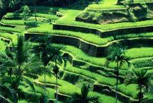 Indinezia / Bali,IndoneziA