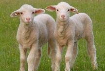 Family Farm...