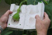 El huerto/ Vegetable garden