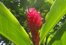 Jardin Verde Palmira HCB