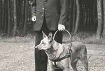 Historie van de geleidehond / KNGF Geleidehonden is opgericht in 1935 en wij zijn hiermee de oudste geleidehondenschool van Nederland. Maar de geschiedenis van de blindengeleidehond gaat nog veel verder terug. Op dit bord pins van KNGF Geleidehonden zelf en andere historische beelden over de bijzondere geschiedenis van de geleidehond.