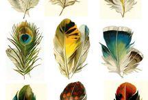 Colori in natura