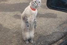 macska kivancsi