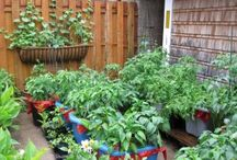 Vegetable Garden / tips and tricks for growing a vegetable garden