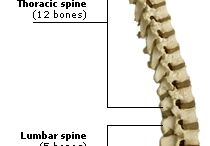 anatomi skeletal