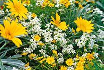 Garden - Colour Combinations