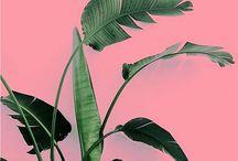 &PLANTS ON PINK / Wie gut Pflanzengrün und Pink zusammen aussehen, seht ihr hier. http://www.pflanzenfreude.de/im-bann-von-plantsonpink
