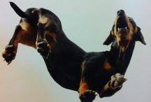*Weenie doggy*