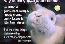 Bunny obsession