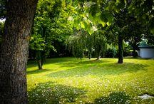 Garden, grass, trees