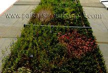 Ecosistema Vertical en Colombia, Medellín. Edificio Green. / Su altura de 92 metros hizo que se requiriera un esfuerzo muy grande en la logística y ejecución, para proyectar los 288 m2 que lo componen.El Jardín vertical del edificio Green destaca en la ciudad por su imponente altura, creando así un conjunto arquitectónico que marque un hito en la ciudad de Medellín. Con nuestros compañeros y aliados de Groncol SAS, y la patente para Ecosistemas Verticales desarrollada por Paisajismo Urbano, os dejamos con el segundo Ecosistema Vertical más alto del mundo.