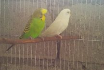 My Pets / Images of my Pets at home like birds, dog and cats etc. / by Jhe Figueroa