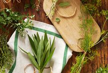 Herbs and Spices / Herbs and spices add zest to a recipe and are good for you too!