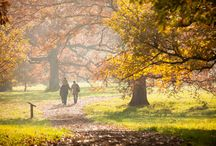 Fall 2015 at The Morton Arboretum / The Morton Arboretum is the place to be this October. See the radiant reds, rich golden yellows and eye-popping oranges of our tree canopy. Join us for our Fall Color Festival with events for children, families and adults.  Learn more --> http://bit.ly/1LRATYx