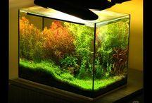 Nature Aquarium / Nature Aquariums