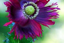 flowers / Thanks for your pins / by trung do