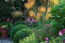 Gardens / I adore gardens - personally prefer Mediterranean style and semi arid planting. Water features and art. No lawns!!