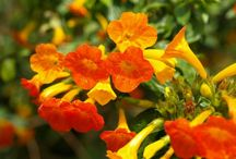 Fabulous Flowers, Gardens, Plants and Related Stuff / by Susan Beal