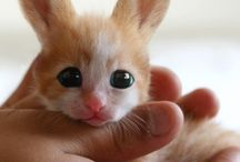 Animals #Cute