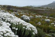 Cape Town Garden Ideas