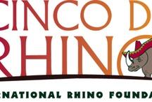Cinco De Rhino Celebration