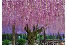 Romantic Wisteria / by Samantha Condon