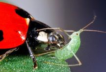 integrated pest control