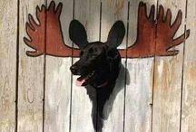 Animal Humor  / by Katie Anne