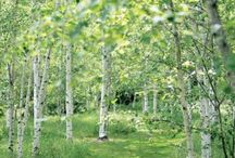 Русский сад с березками