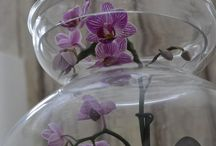 Plants ☆ Flowers / Also Terrarium & Garden tips