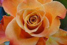 Gorgeous blooms / by karan mccoy