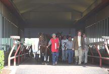 2014 Oklahoma Derby / Fun at the 26th annual Oklahoma Derby!