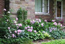 Garden / by Ashley Maurer