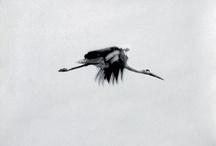 Art to Experience  / by Birdie Freitag