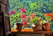 Flores en mi ventana