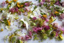 kraute,pflanzen,Blumen gesammelt