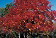 Dammann's Trees / by Dammann's Lawn, Garden, & Landscaping Centers