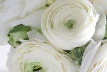 Mariage en blanc