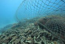 Ocean Trawling