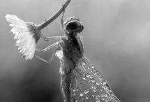Nos inspirations FALL - WINTER 2014 / La libellule dans tout ces états