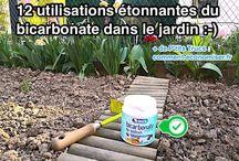 Utilisation bicarbonate de soude au jardin