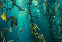 Underwater moodboard