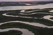 WIP - Marsh