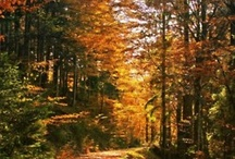 the joys of autumm / by Alison .