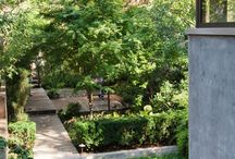 city garden/backyard