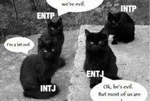 INTJ ~ / My personality