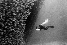 Buceadas a hacer - Divings