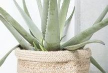 healthy plants for in the house