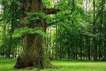 Trees / Collection of pictures of trees. Life on earth in it's beauty ...