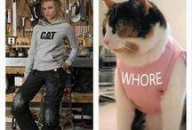 Cats dgaf